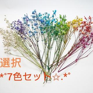 ★ドライフラワー かすみ草 6色オーダー★(ドライフラワー)
