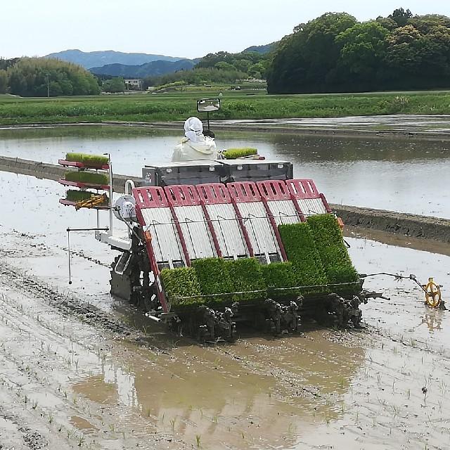 コシヒカリ白米27キロ 30年産 食品/飲料/酒の食品(米/穀物)の商品写真