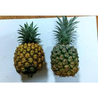 沖縄本島北部産 ゴールドバレルとスナックパイン2玉セット♪(フルーツ)