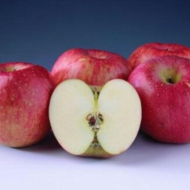 りんご 大阪府  送料込  食品/飲料/酒の食品(フルーツ)の商品写真