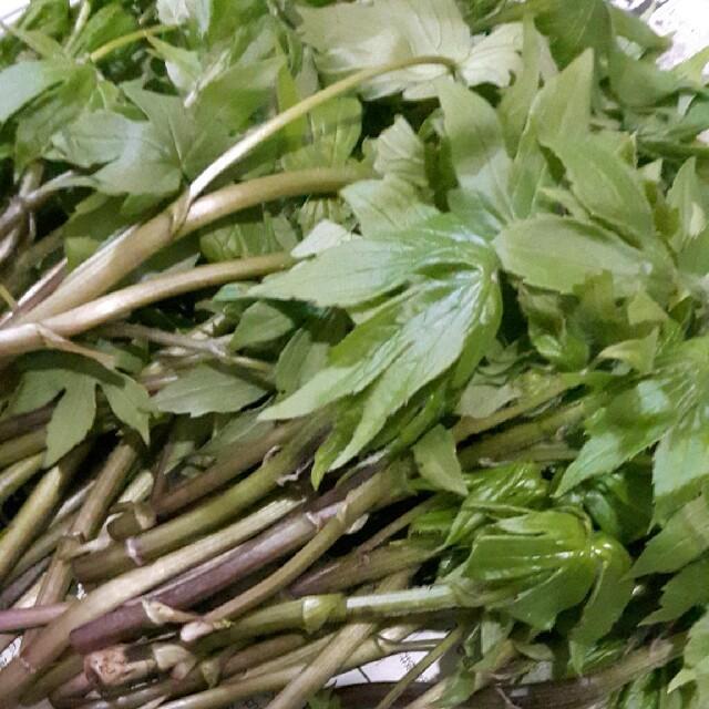 天然シドケ 即購入⭕ 食品/飲料/酒の食品(野菜)の商品写真