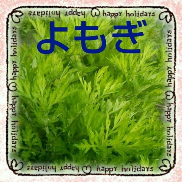 漢方薬と料理に!ヨモギの苗    育て方説明付! 食品/飲料/酒の食品(野菜)の商品写真