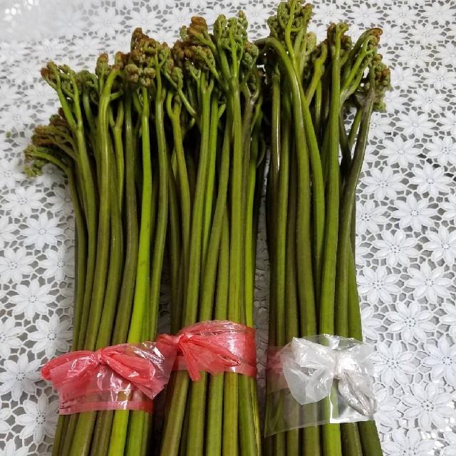 ワラビ 山菜 天然 3キロからお願いします(^-^) 食品/飲料/酒の食品(野菜)の商品写真