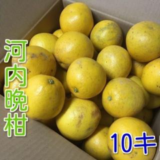 今から旬!熊本河内晩柑 約10キロ