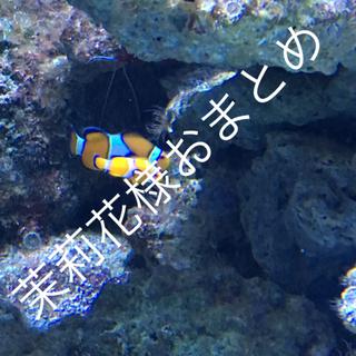 サマンサモスモス(SM2)のサマンサモスモス  ブルー 刺繍が可愛い 羽織り(その他)