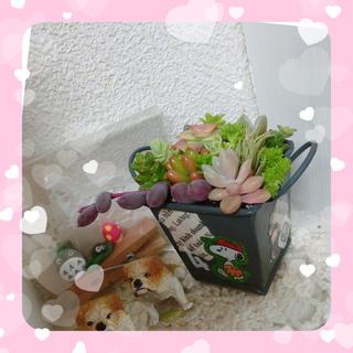 ☆多肉植物 寄植え☆ミニバケツ四角☆黒☆(その他)