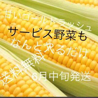 無農薬トウモロコシ入るだけ入れます。激安価格(野菜)