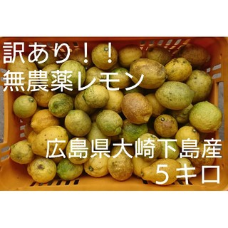 訳あり!広島県大崎下島産無農薬レモン5キロ