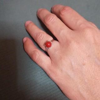本珊瑚指輪(リング(指輪))