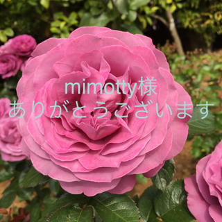 mimotty様お手続きページ(リング(指輪))