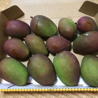 グリーンマンゴー   摘果用   1キロ(フルーツ)