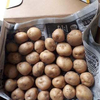 国産無農薬 じゃがいも ハウス栽培 小玉 1kg 送料無料