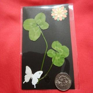 ❤️幸せの四つ葉のクローバー5枚セット❤️天然白爪草❤️送料無料❤️(ドライフラワー)