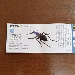カイヨウドウ(海洋堂)のカプセルQ キタカブリ色彩変異【青】(その他)