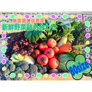 農家直送 新鮮野菜 野菜詰め合わせ 無農薬 低農薬