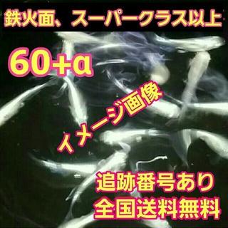 メダカ の 飼育水    検索ワード→→ たまご みゆき 卵 飼育 三色 楊貴妃