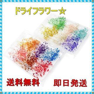 かすみ草 ドライフラワー☆ 12色 3~5cm セット★即日発送★ (ドライフラワー)