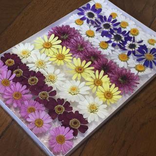 お花屋さんが作った季節のドライフラワーmix   Rd-1(ドライフラワー)