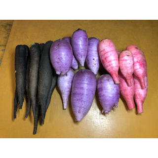 群馬県産、産地直送。ダイコン3色、3.5kg無農薬。(野菜)