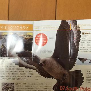 カイヨウドウ(海洋堂)のオオトウゾクカモメ フィギュア(その他)