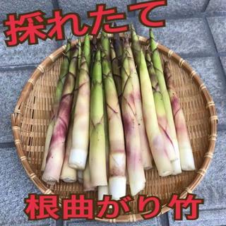 青森県産 根曲がり竹 あした収穫、発送