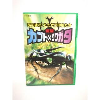 【美品】NNK『激闘 カブト×クワガタ~あつまれ!たたかう甲虫たち』DVD/廃盤