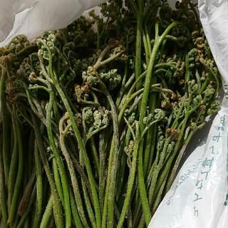 わらび4kg(野菜)