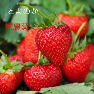 いちご苗 とよのか 3株700円(野菜)