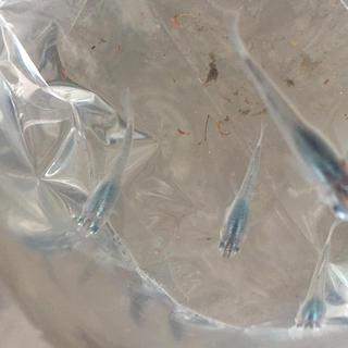 深海 メダカ 水草と飼育水