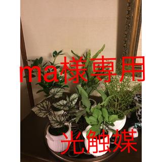 人工観葉植物 アスパラ、フィカス、カーリーファン、ベコニア、スペアーミント