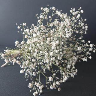 かすみ草ドライフラワー ナチュラルホワイト中 【花材】(ドライフラワー)