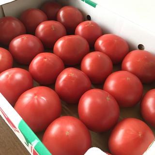 訳あり 新鮮 完熟トマト 〈期間限定〉🍅送料込み!(野菜)