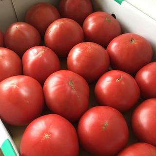 訳あり 新鮮 完熟トマト Lサイズ 〈期間限定〉🍅送料込み!(野菜)