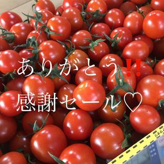 ミニトマト3kg  (野菜)