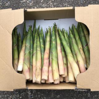 根曲り竹 1、5kg 新潟県妙高産(野菜)