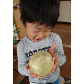 農家さんから直送 淡路島産 新玉ねぎ(早生) 5kg 「フルーツ玉ねぎ」(野菜)