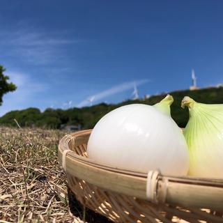 淡路島 新玉ねぎ たまねぎ 10kg(野菜)