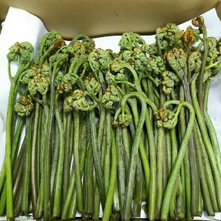 わらび 1200g 重層付き(野菜)