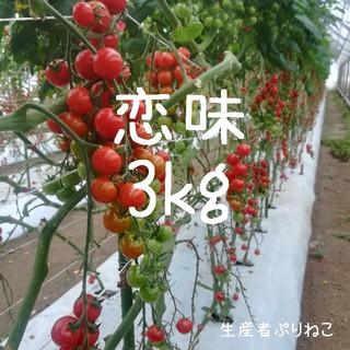 23日発送 こいあじ3kg ミニトマト
