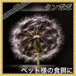 綿毛1個分❁たんぽぽ 種子【野放し・手間いらず】 参考画像有✾種 たね,タネ(その他)