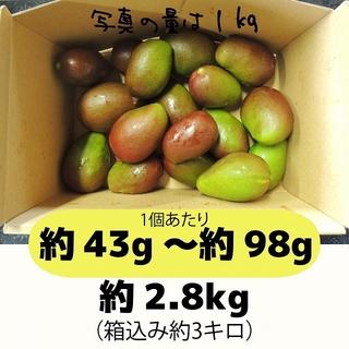 [黄3]約2.8キロ グリーンマンゴー 青マンゴー 摘果マンゴー 加工用(フルーツ)