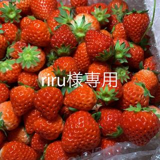 riru様専用ジャム用●さがほのか苺4kg●規格外 いちごイチゴ(フルーツ)