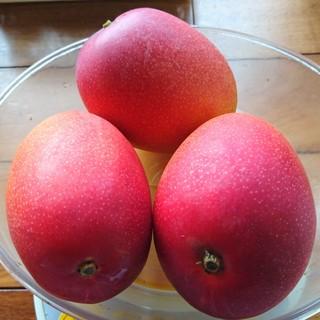 農家直送完熟アップルマンゴー贈答用