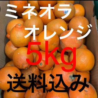 アメリカ産 訳あり傷ありミネオラオレンジ約5kg