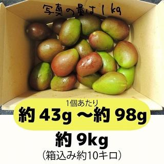 [黄10]約9キロ グリーンマンゴー 青マンゴー 摘果マンゴー 加工用(フルーツ)