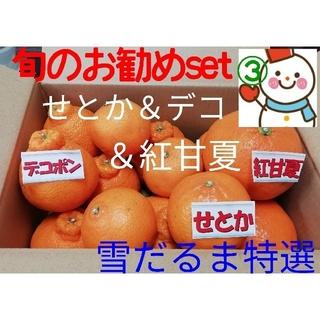 おすすめset③♥️雪だるまの果物(せとか&デコ&紅甘夏)不知火