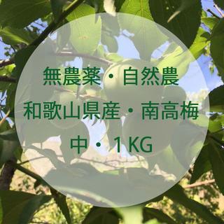 【無農薬・自然農】和歌山県産 南高梅 1㎏ 中