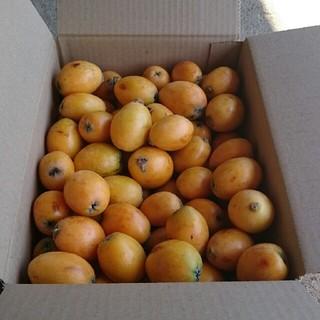 高知産びわ2kg(やや小ぶり)無農薬有機栽培 注文確定後収穫   クール便