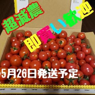 赤い宝石!【水の都熊本産】ミニトマト箱込み1,3㎏まずはひと口マヨネーズいかが?