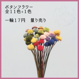 ボタンフラワー 全11色+1色 量り売り(ドライフラワー)